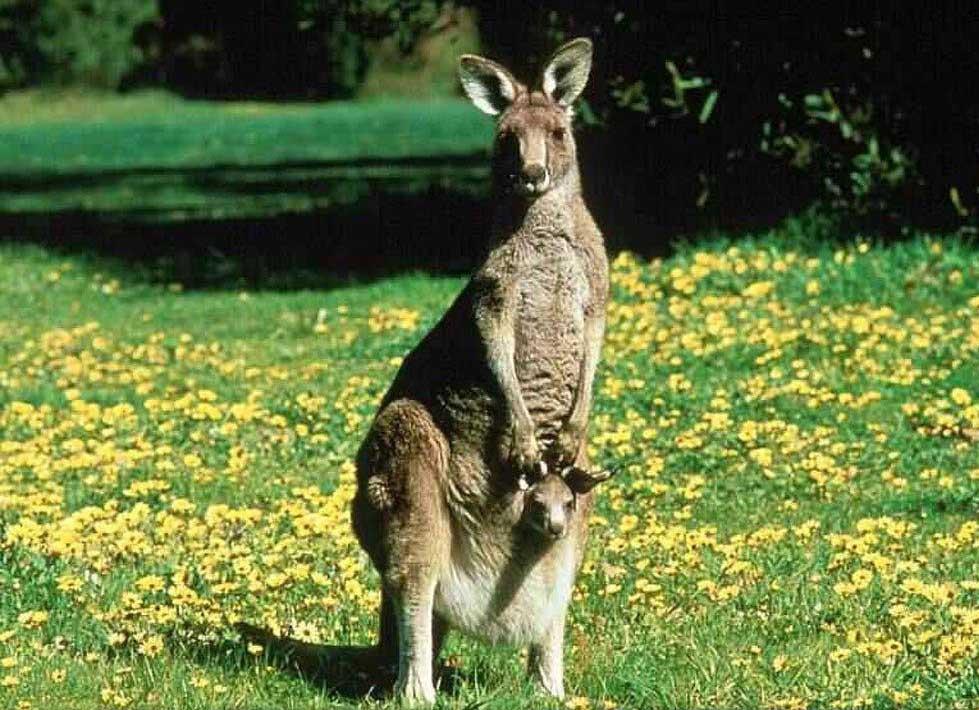Những danh thắng không thể bỏ qua khi đến Úc