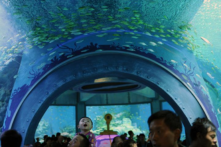 Vui chơi thỏa thích ở công viên Hải Dương học Hong Kong