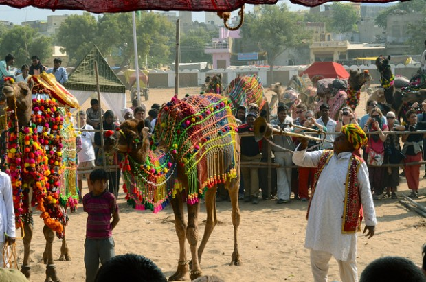 Lễ hội chợ phiên lạc đà cực độc lạ ở Ấn Độ