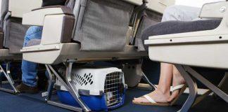 Quy định vận chuyển vật nuôi Thai Airways
